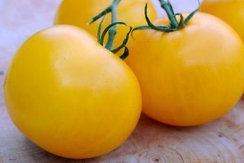 lemon boys